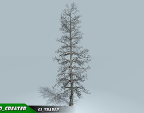 realtime Realistic Blue Spruce Tree 3D Model