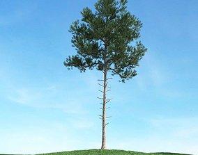 3D model High Branch Pine Tree