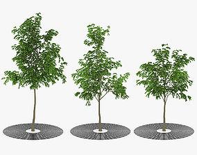 Street Tree 02 3D