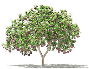 3D model Common Fig Tree with Fruits