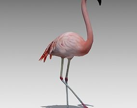 Flamingo Animated 3D asset game-ready
