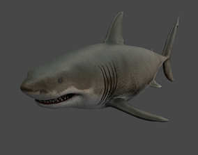 3D asset realtime Great White Shark