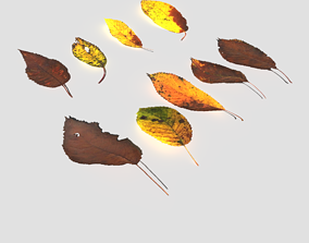 Dry Cherry Leaves Pack 3D asset
