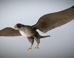 Falcon 3D