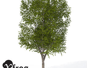 XfrogPlants American Planetree 1 3D