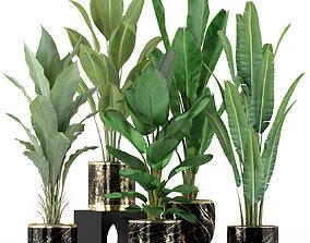 Plants collection 229 3D