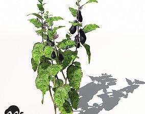 3D XfrogPlants Eggplant