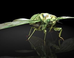 Insect Collection8 Cicada 3D model