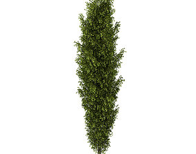 3D model Poplar 2 Populus