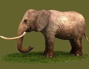 3D model Elephants savanna elephants African animals