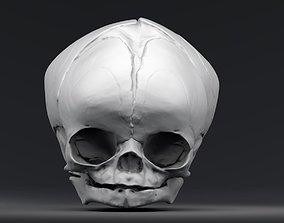 3D print model Fetal Skull