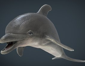 dolphin 3D model game-ready