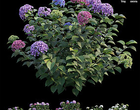 3D model Hydrangea Plant set 33