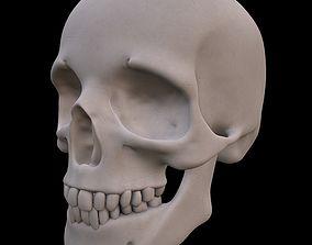 3D PBR Human Skull