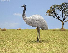 Emu Dromaius Novaehollandiae 3D