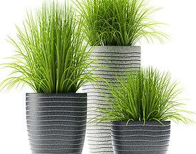3D Grass plants