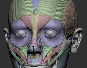 Facial muscles for 3d printing