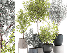 Eucalyptus trees in a flowerpot for interior design 551 3D