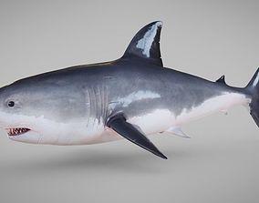 3D model Shark Rigged Blender