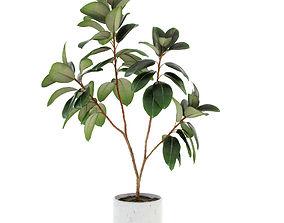 Ficus elastica decora large 3D