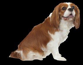 3D print model Coolest Dog Ever