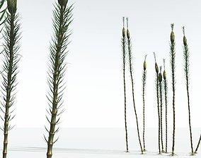 3D EVERYPlant Suckows Horsetail Tree 08 --16 Models--