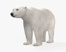 3D model Polar Bear HD