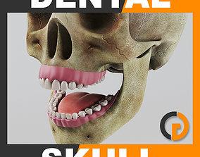 3D Human Dental Skull - Teeth Gums Tongue - Anatomy