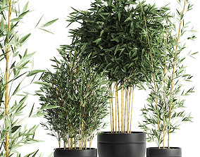 3D model Bamboo bush for the interior in a black flowerpot