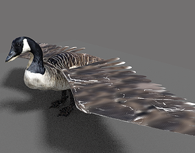 goose domestic 3D