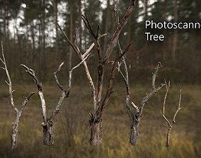 3D model Photorealistic Photoscanned Tree