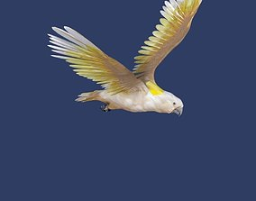 3D model cockatoo animated
