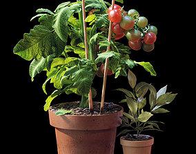 Set of plants 06 3D model
