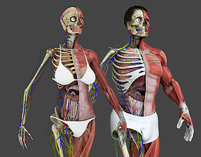 3D asset Motion Capture Anatomy Combo