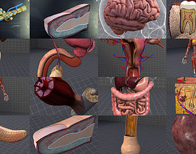 Complete Human Body Systems Collection 3D