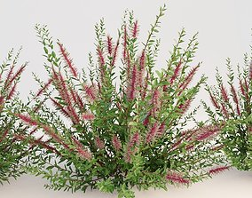 environment Plants 3D