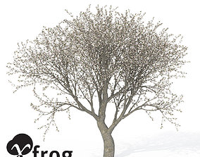 XfrogPlants Apple Tree 3D