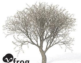 XfrogPlants Apple Tree 3D