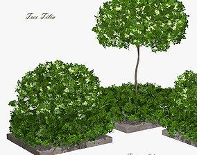 Tree Tilia 3D