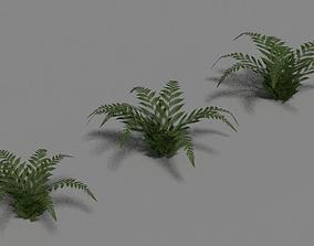 3D model Green Fern Set