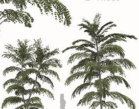 3D Set of Cercidiphyllum japonicum or Katsura Tree - 2