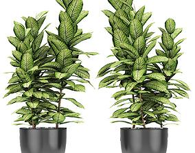 nature Plant in Pot Flowerpot Exotic Plant 3D