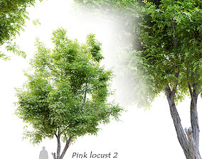 Robinia ambigua decaisneana 2 3D model