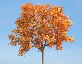 Mature Ash Tree On Hillside 3D model