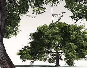 EVERYPlant English Oak 12 -- 10 Models vegetation 3D