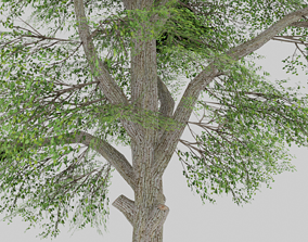 LOW-POLY GAME MODEL - TREE 3D asset