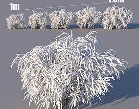 3D model Winter wild bushes
