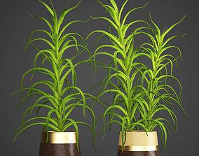 Aloe vera plant in pot 3D