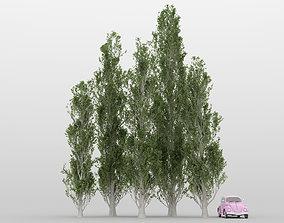 3D model Poplar Tree Pack 01
