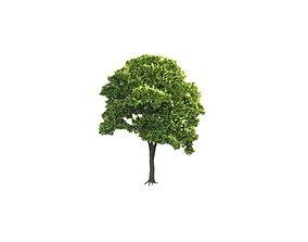 Low Poly Tree Stylish 3D model